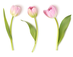 Set of decorative flowers isolated on white background. Vector pink tulip for spring holidays decor