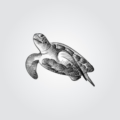Hand Drawn Sea turtle Sketch Symbol isolated on white background. Vector of Underwater world elements In Trendy Style. Engraving style pen pencil crosshatch.