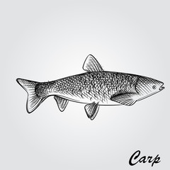 Hand Drawn Carp Sketch Symbol isolated on white background. Vector of Fishing elements In Trendy Style. Sketch of saltwater sea or freshwater river fish species flounder