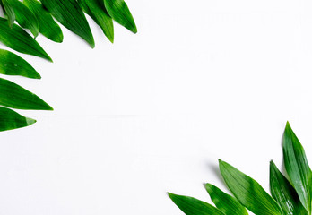 Frame for a banner with natural leaves. Background with leaves for design. Photo of natural leaves with space for copispeys. View from above