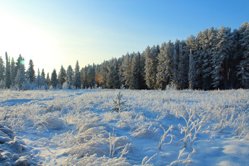Beautiful view of the snowy forest and the field. Winter forest covered with snow. Background. Landscape.