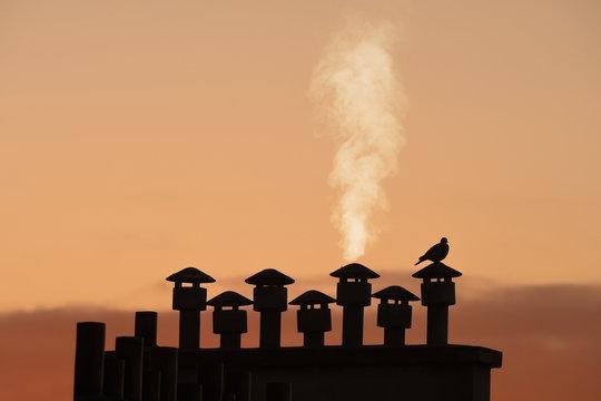 cheminée toit ville oiseau chauffage énergie fumée pigeon froid hiver silhouette urbain immeuble paris
