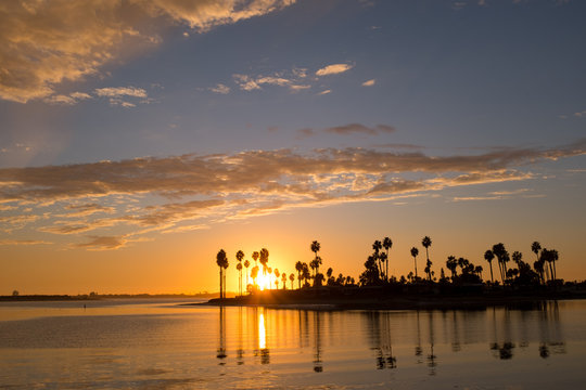 Iconic silhouette of palm trees over Mission Bay San Diego