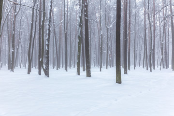 view of bare forest trees in winter during foggy weather