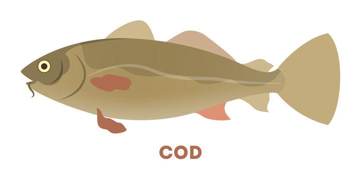 Atlantic cod fish aquatic animal. Marine creature.