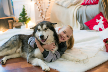 Cute girl  with blond hair having fun at home with a dog Malamute and Labrador at home in a decorated room for Christmas