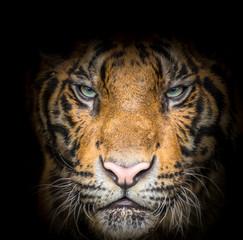 Fierce tiger face