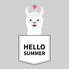 Hello summer. Llama alpaca face head in the pocket. Butterfly. Cute cartoon animals. Kawaii character. Dash line. White and black color. T-shirt design. Baby gray background. Flat design.