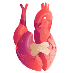 Vector realistic Human heart. Anatomy concept. illustration