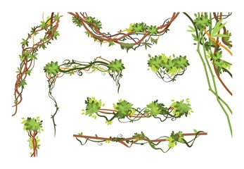 Jungle vine branches. Cartoon hanging liana plants. Jungle climbing green plant vector collection. Illustration of liana branch plant, leaf flora hang Wall mural