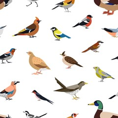 Seamless pattern with wild forest birds on white background. Backdrop with avians. Ornithological vector illustration in modern geometric flat style for wrapping paper, fabric print, wallpaper.