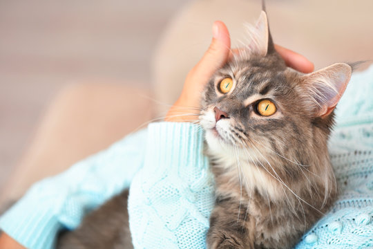 Woman with adorable Maine Coon cat at home, closeup. Space for text