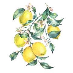 Watercolor vintage greeting card, branch of fresh citrus yellow fruit lemon