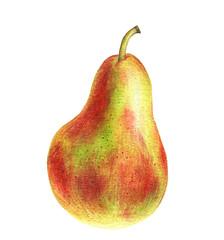 watercolor drawing green pear