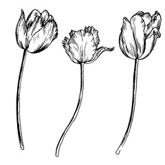 vector set of drawing flowers