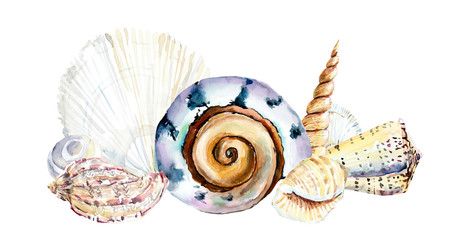 Frame from seashells. Watercolor hand drawn illustration