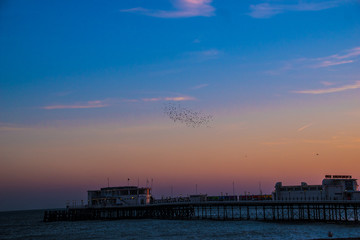 Starling, murmuration Worthing Pier Sussex England UK
