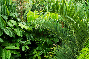 Tropical plants in Royal Botanic Gardens, Kew ( Richmond )