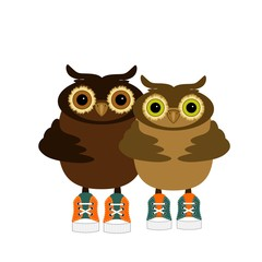 pair of cute owls on white background