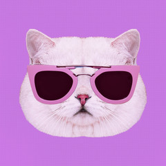 Contemporary art collage. Glamor white kitty in stylish sunglasses