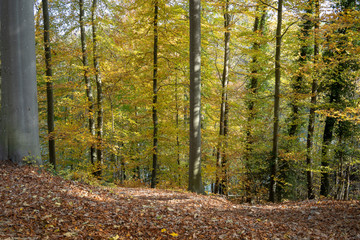 Forest during Autumn at Switzerland