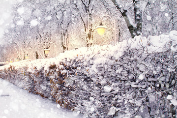Winter city park landscape. Frosty trees in park. Snow covered trees. Snow falling background
