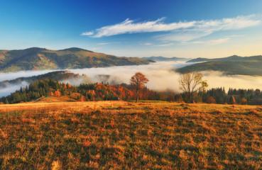 autumn sunrise. foggy morning in the Carpathian mountains