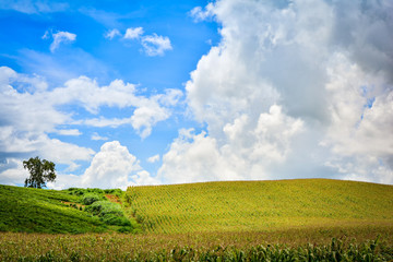 Landscape of green field on mountain / View Corn field in farm agriculture and blue sky background