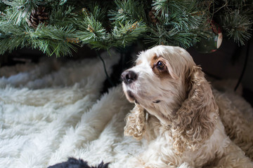White dog by Christmas tree