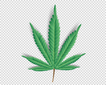 Cannabis,Marijuana leaf on transparent