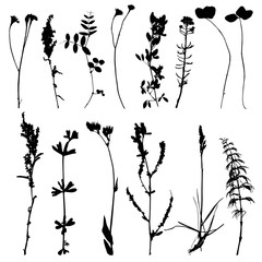 Set of herbs and flowers silhouettes