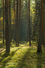 beautiful mixed autumn forest lit by sunlight in Russia