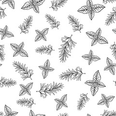 Seamless vector pattern with hand drawn spice herbs rosemary and basil
