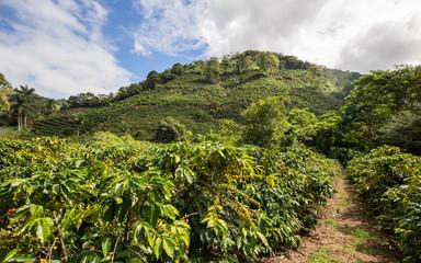 Papiers peints Blanc Plantation de café, Costa Rica