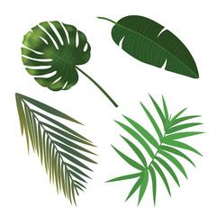 Tropical Plant Leaf Set. Realistic palm leaves.