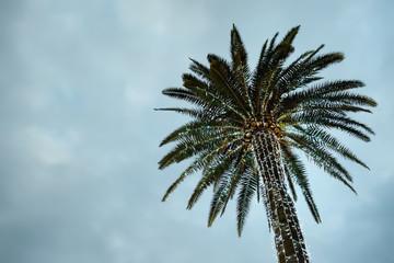 Illuminated palms at a street