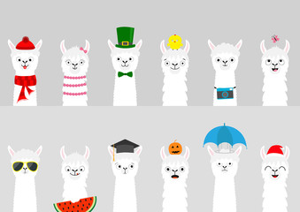 Alpaca llama set. Cute cartoon funny lama character. All seasons. Happy Valentines Christmas St Patrick day Easter Egg Chicken Bird Umbrella Santa hat, sun Flat design Gray background