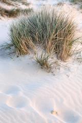 Dünensand mit hohem Gras
