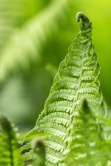 beautiful green fern leaves