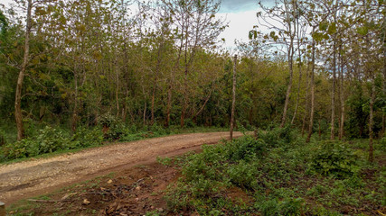 Teak Forest Road