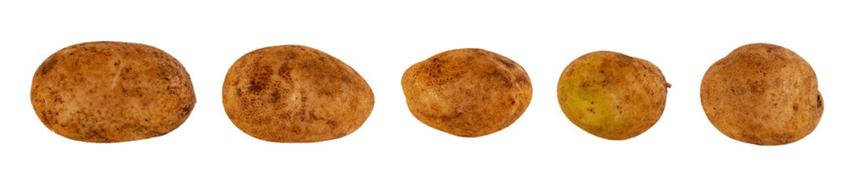 Untreated potato tubers white background