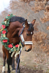 Head shot portrait of a christmas horse at rural scene against natural background