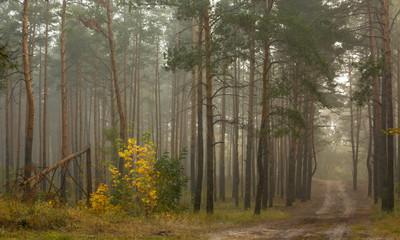 autumn travel. autumn forest. autumn colors. nature. landscape.