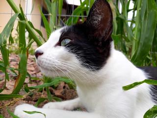 Gato olhos verdes green eyes cat