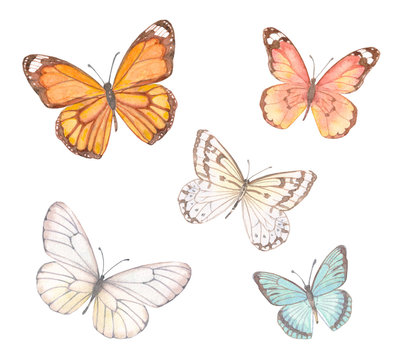 collection of delicate butterflies. watercolor painting