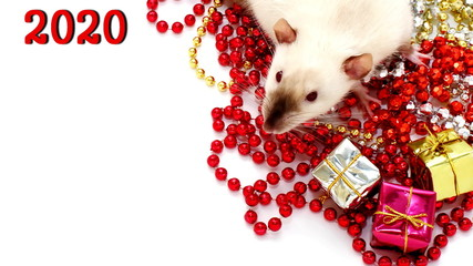 New year 2020. Symbol of the year of the rat.