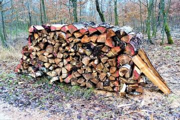 Wald - Brennholz - Stammholz - Waldweg
