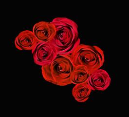 Rose rosse in nero