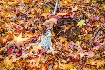 Autumn leaves with a steel rake and basket.