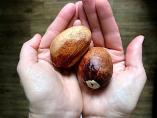 Avocado bones in the palms./ Large brown avocado bones in the palms.